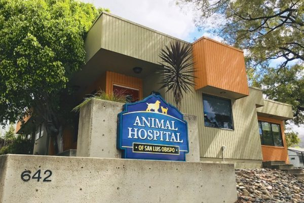Welcome to Animal Hospital of San Luis Obispo!
